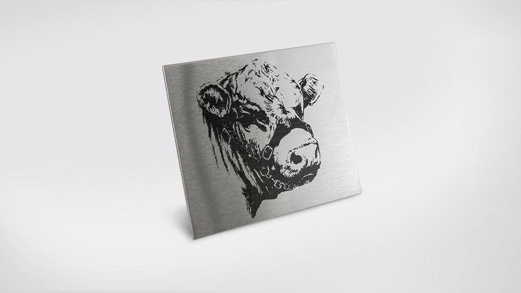 A laser etched stainless steel plaque of a cow.